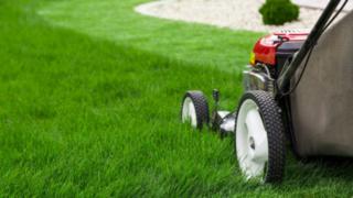 Lawn Services in Tauranga