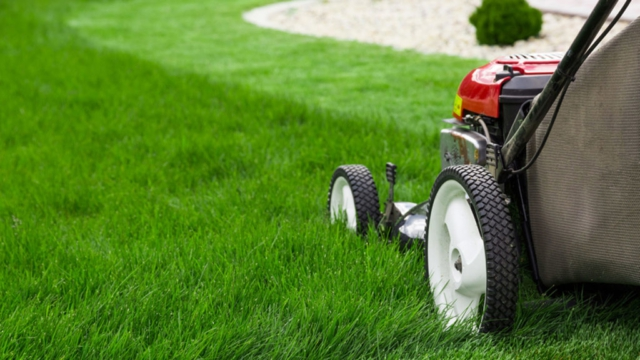 Lawn Services in Tauranga