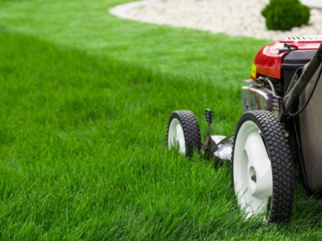 Lawn Services Tauranga